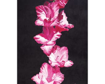Traditional Wall Art 'Bright Pink Glads' by Cathy Pearson - Floral Decor Traditional Gladiolus Artwork on Metal or Plexiglass