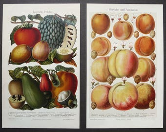Attractive 1897 Set Of 2 Antique Lithographs Of FRUITS. Kitchen Decor. Botany.  Tropical Fruits