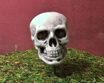 Miniature Skeleton Skull, Halloween Decoration