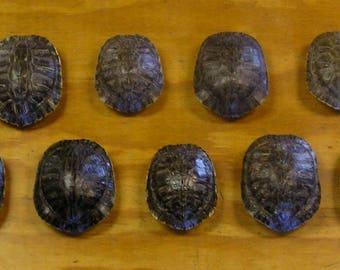 "9 - 4"" Red Ear Slider Turtle Shells"
