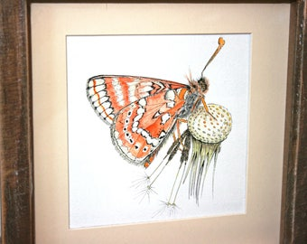 Marsh fritillary butterfly on a dandelion watercolour & ink original hand drawn painting orange butterfly framed watercolor