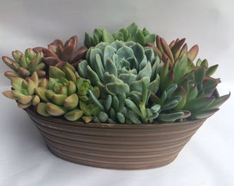 Succulent Plant Arrangement Completely Assembled Succulent Dish Garden in an Oval Tan Designed Tin.