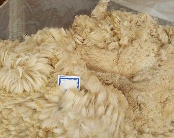 Rocky's fleece