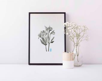Peruvian Lily A4 Print