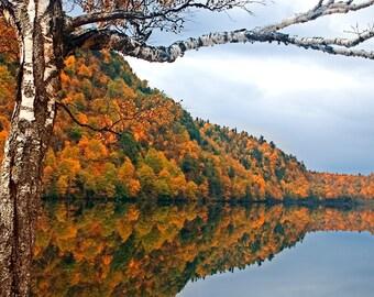 Birch Tree, Autumn Print, Lake Placid, Adirondack Mountains, Inspirational Photography, Yellow, Nature Photography, Gift Idea, Fine Art