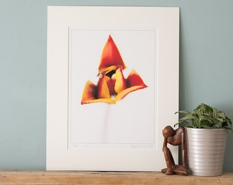 Tulip - Fine Art Photography Print with Mount to fit a ready-made 24x30/30x40/40x50cm frame