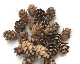 Small Pinecones Real Pinecones Natural Christmas Decor Winter Crafts Rustic Decor Holiday Crafts Fall Decor Fall Crafts Holiday Decor 25