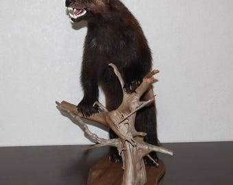 Wolverine Animal Etsy
