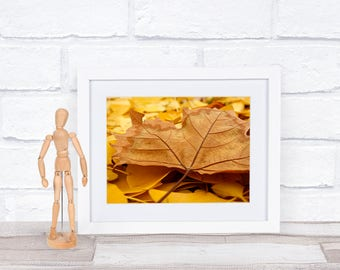 Autumn Leaf, Nature Photography, 8x10, Instant Download, Fall Photography, Macro Photography, Autumn Leaves