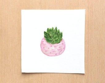 Succulent Art, Tiny Paintings, Miniature Paintings, Dorm Wall Art, Mini Succulents, Small Art, Small Paintings, Plant Art, Dorm Decor