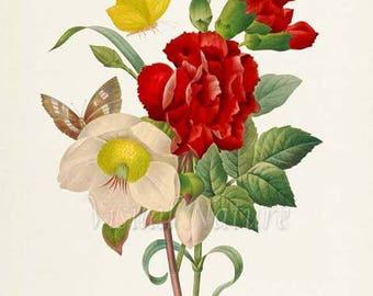 Carnation Flower Art Print, Botanical Art Print, Flower Wall Art, Flower Print, Floral Print, Redoute,red, yellow, white, butterfly, Oeillet