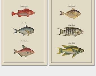 Fish Wall Art, Fish Prints Decor, Set of Vintage Fish Prints,  Art Prints, Gift for Him, Cabin Decor, Cottage Art, Rustic Prints