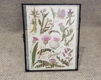 Vintage framed botanical drawing, flower illustrations, botanical print, floral, in glass frame, Green leaves Purple Thistles Scottish