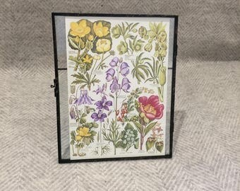 Vintage framed botanical drawing, vintage botanical flower illustrations, botanical prints, floral, in glass frame, pink purple
