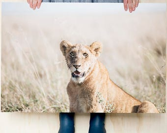 Lion cub in the grass // Colour photography print // Large print // Wildlife photography // Home Decor // Birthday gift idea