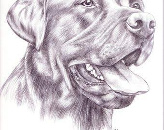 pet portrait graphite