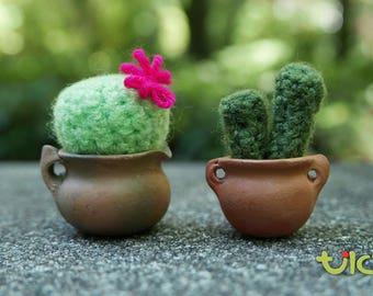 XS - Combo Cactus