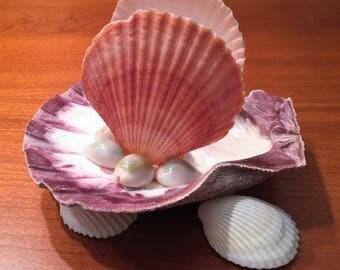 shell napkin holder