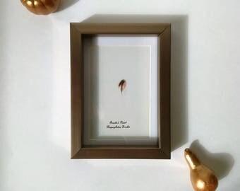 Framed Feather, Custom Framed Feather, Feather decor, Natural Feather Gift, Bird lover, Housewarming Gift, Birthday Gift, Anniversary Gift,