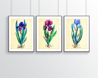 Irises Set, 3 Irises Art Print, Iris Poster Set, Irises Painting, Botanical Print Set, 3 Irises Wall Art, Flowers Print Set, Flower Wall Art