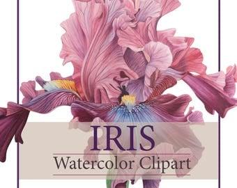 Iris Clipart - Watercolor Clipart - Flower Clipart -Digital Flower - Instant Download - Hand painted - Wedding - Clipart - Iris