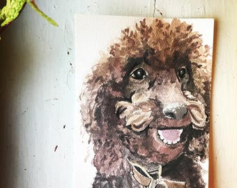 Charley, the Chocolate Poodle