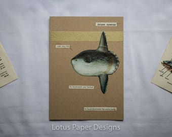 Handmade Blank Greeting Card (Folded A6) - Ocean Sunfish - Golden Guide to FISHES