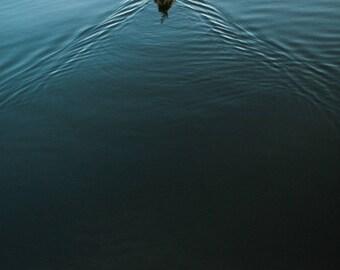A Bird in Calm Water