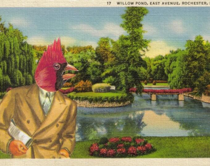 Red Cardinal Art Collage, Retro Postcard Artwork