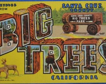 Large Letter Greetings Big Trees Park Santa Cruz County California Linen Postcard Unused