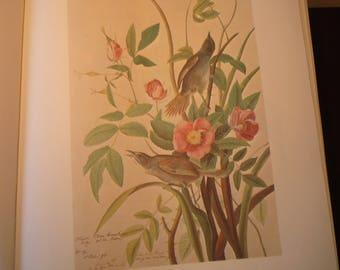 Seaside Sparrow - Audubon Color Print from original 1820s painting - beautiful birds - gift for birders nature lovers - New Jersey bird