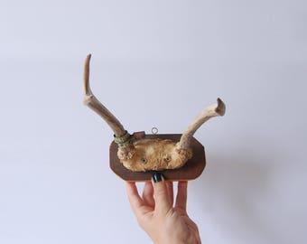 Vintage Mounted Antlers - Vtg Antlers - Vintage Tagged Antlers - Vintage Decor - Hanging White Tail Deer Antler Decor - Gift for Her