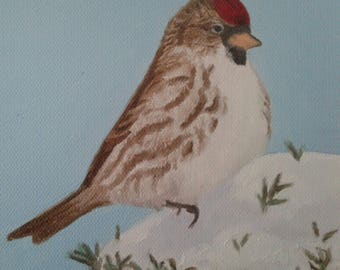 Red Poll Painting Original Bird Art Winter Finch Wildlife Art Finch Painting Winter Scene Bird Lovers Nature Lovers Karen  Snider