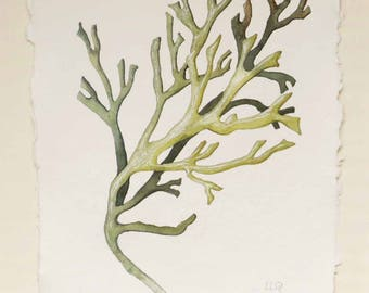 Original illustration watercolour painting of green seaweed natural history rockpools beach seaside ocean plant