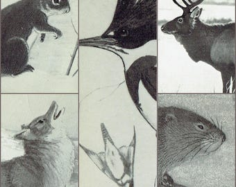 Vintage Set of 5 Post Cards National Museum of Canada Animals Kingfisher Elk Red Squirrel Muskrat Coyote Postcards Sketches Drawings Unused