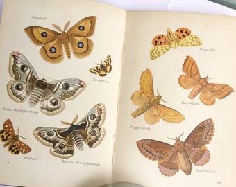Butterfly book, Moths, Natural history, German book, Das Fleine Bud ber Nadfalter, Lepidoptera, Insel-bucherei series