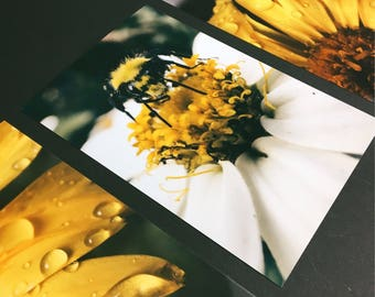 3pack - Floral Photography - Macro Photography - Bee flower Photography