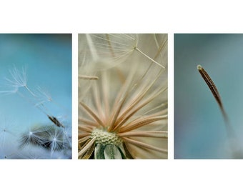 Dandelion pictures fine art photo set of 3, dandelion macro photography nature botanical wall art prints, beige teal aqua vertical art decor