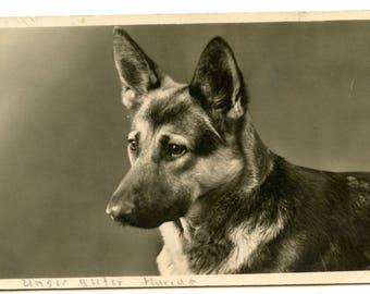 1940s German Shepherd Real Photo Postcard Antique Vintage RPPC Alsatian Dog Gundog