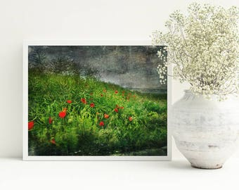 Poppy wall art, Poppies digital photo, Poppies print art, Poppies Printable, wild flowers art, Living room decor, Photography 8x10, wall art