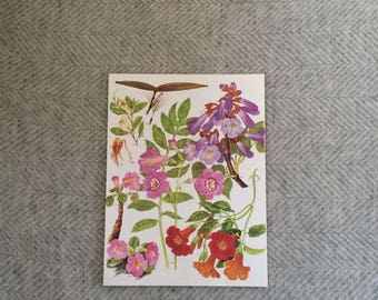 Genuine vintage large botanical drawing, bright flower illustration, botanical print, floral, green pink purple redtropical wall art gift
