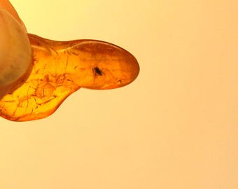 Baltic Amber Piece With Fly Insect Inclusion. Clearly seen.  With magnifying box.