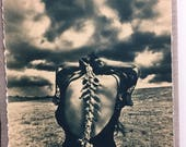 Spine 13X18 6/50 limited edition cyanotype print