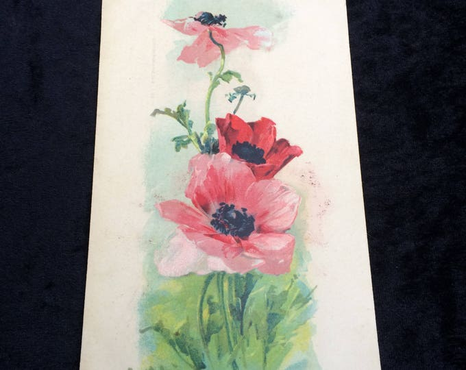 Catherine Klein Postcard, Artist Signed (Underlined) Red Pink Poppies, No Writing on Reverse, Good Condition, Circa 1910