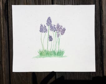 Lavender. 8x10 original watercolor painting