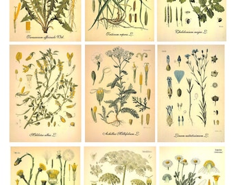 Digital Image Botanical-2 Cards - Digital collage sheet, Printable Download, Digital Tags, Digital Vintage, ATC Card, Vintage Cards
