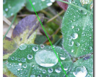 Postcard, water drops on clovers