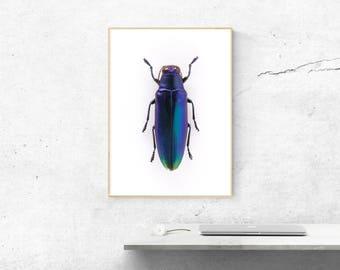 beetle-nature wall art- insect art print- entomology-photo gifts-home decor- wall art-