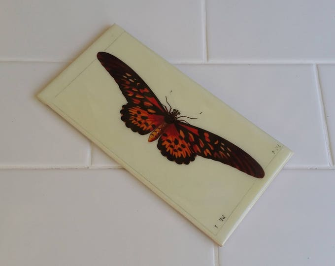 Bathroom or Kitchen Feature Tiles - Butterfly Images on Custom Feature Tiles - Renovation or Interior Design Idea