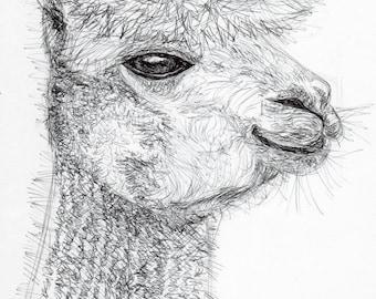 Inktober #19 2017 - Alpaca [PRINT]